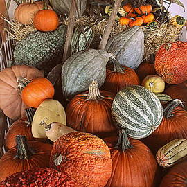 Photographic Art and Design by Dora Sofia Caputo - Pumpkins and Gourds
