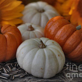 Luv Photography - Pumpkins and sunflower seeds