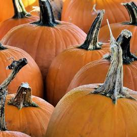 Janice Drew - Pumpkins