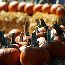 Joseph Coulombe - Pumpkins