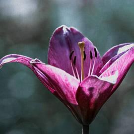 Alexander Senin - Puple Day Lily Textured 11