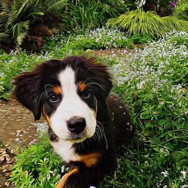 Jordan Blackstone - Puppy Art - Little Lily
