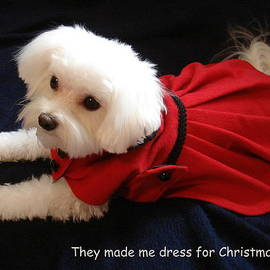 Mary Beth Landis - Puppy Coat