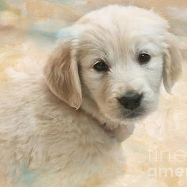 Jayne Carney - Puppy Eyes