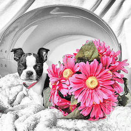 Lori Frostad - Puppy Flower