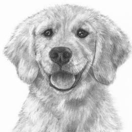 Kate Sumners - Puppy Golden Retriever