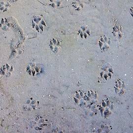 Melissa Darnell Glowacki  - Puppy Paws