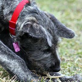 Ann Butler - Puppy Play