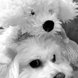 Mary Beth Landis - Puppy Puppy