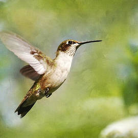 Christina Rollo - Pure Joy Hummingbird