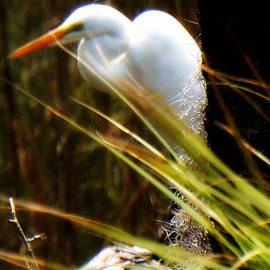 Laurie Pike - Pure White Egret