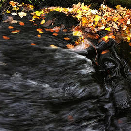 Colette V Hera  Guggenheim  - Pure Wild Autumn Denmark