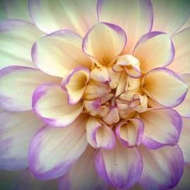 Wendy Yee - Purple And Yellow Dahlia