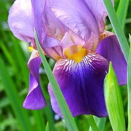 Brenda Ketch - Purple beauty