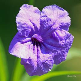 Suzanne Gaff - Purple Bell