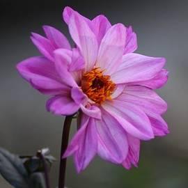 Cynthia Guinn - Purple Daisy