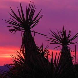 James Welch - Purple Desert