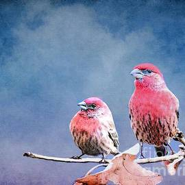 Janette Boyd - Purple Finches