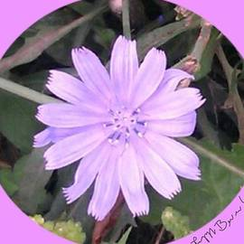 Peggy Beverley - Purple Framed Chicory Flower