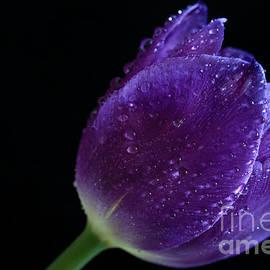 Tracy  Hall - Purple Glow