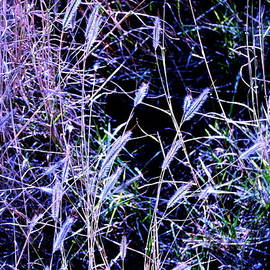 M E Wood - Purple Ground Cover