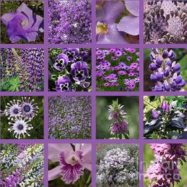 Carol Groenen - Purple in Nature Collage