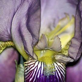 Brian Wallace - Purple Iris - Macro
