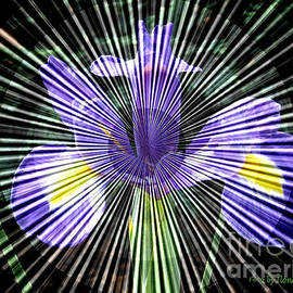 ILONA ANITA TIGGES - GOETZE  ART and Photography  - Purple Iris 	Prismatic