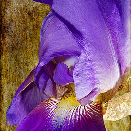 Phyllis Denton - Purple Iris Textured