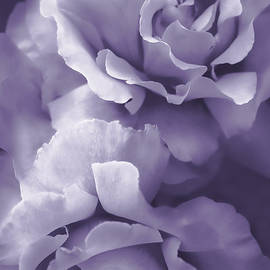 Jennie Marie Schell - Purple Lavender Roses
