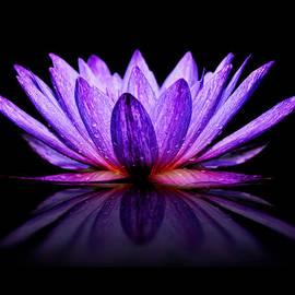 Carol Eade - Purple Lily