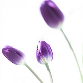 Lynne  Douglas - Purple May