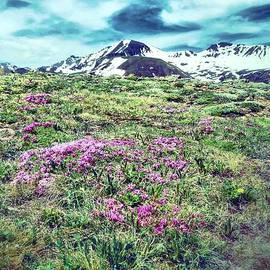 Dan Sproul - Purple Mountain Majesty