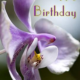 Carolyn Marshall - Purple Orchid