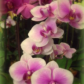 Miriam Danar - Purple Orchids for My Love - Flower Photography