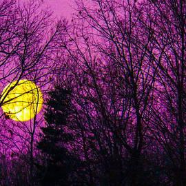 Kathy Liebrum Bailey - Purple Passion Moon at Sunrise
