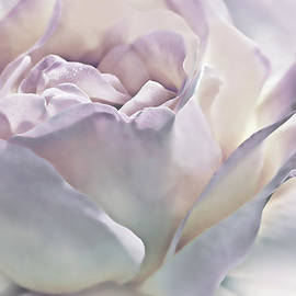 Jennie Marie Schell - Purple Passion Pastel Rose Flower