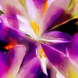 Rene Crystal - Purple Petal Splash