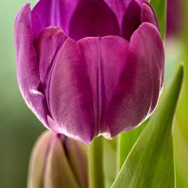 Deb Halloran - Purple Splendor