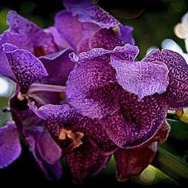 Toni Abdnour - Purple Summer
