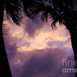Jennifer White - Purple Sunset Silhouette