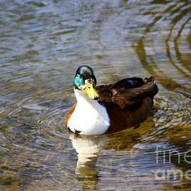 Patti Whitten - Quack