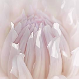 Jennie Marie Schell - Queen Pink Dahlia Flower