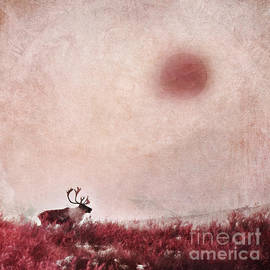 Priska Wettstein - Quest for solitude
