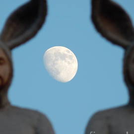 Michael Hoard - Rabbit People On A Roof In New Orleans Louisiana Moon Focus #4