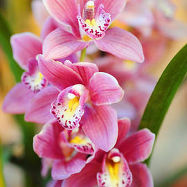 Jenny Rainbow - Radiance of Beauty. Orchids