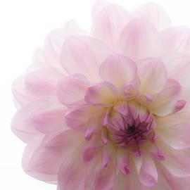 Kevin Bohner - Radiant Bloom