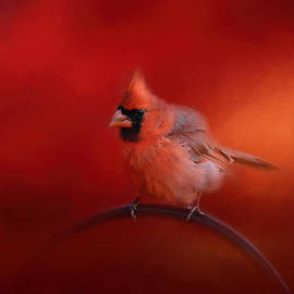 Jai Johnson - Radiant Red Bird