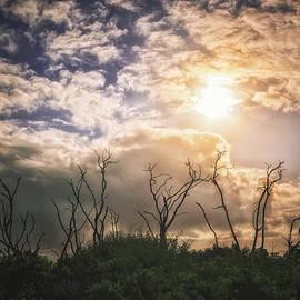 Louise Hill - Rain Clouds