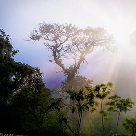 Rdm-Margaux Dreamations - Rain Forest Sun